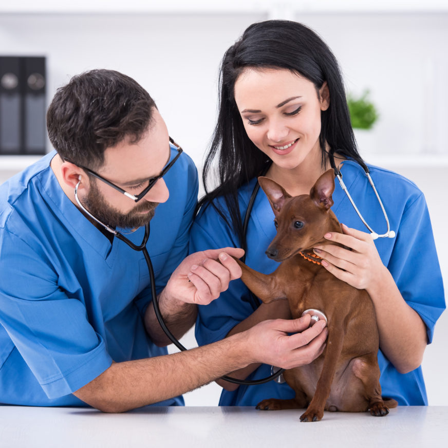Become a Veterinary Technician